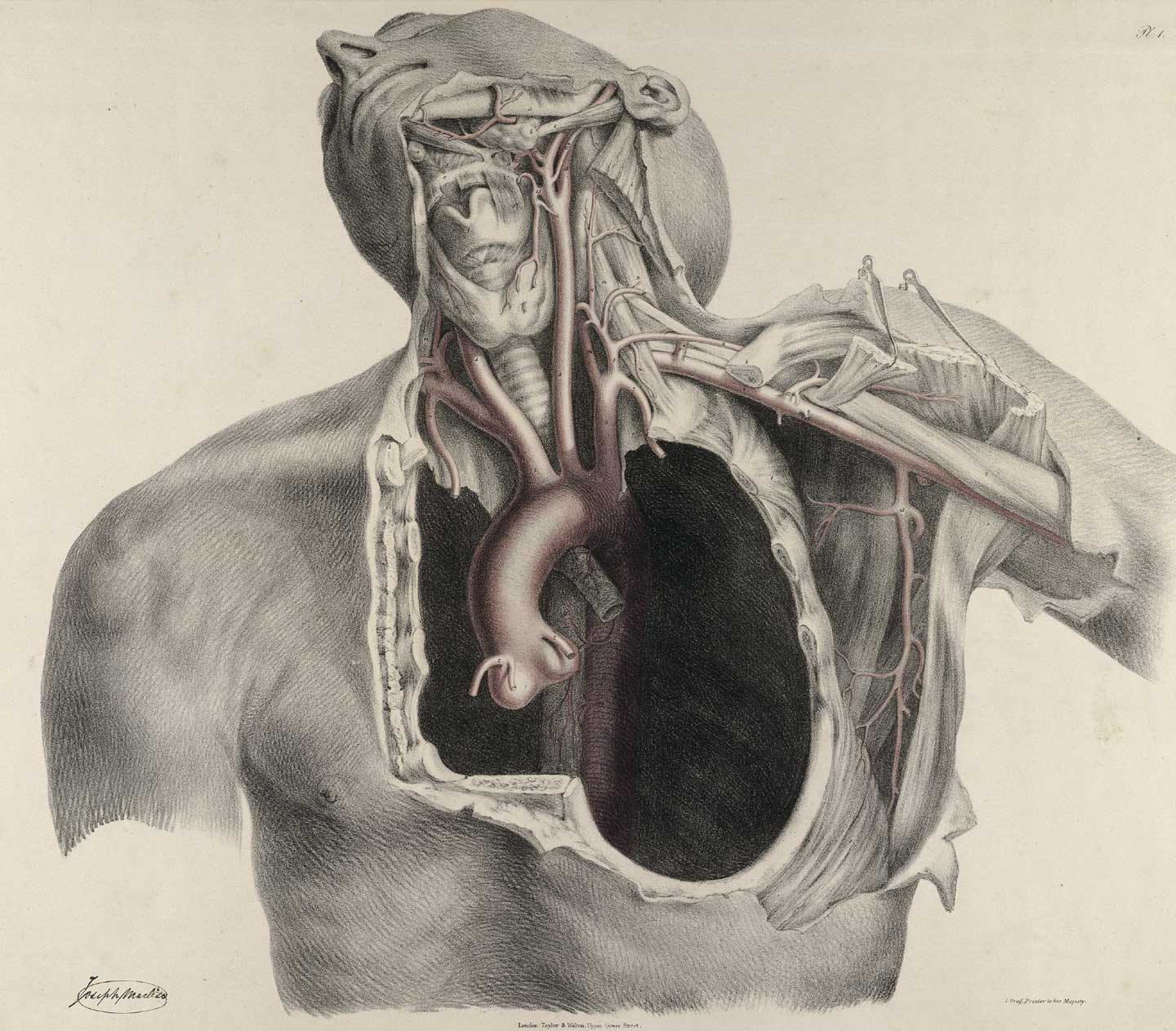 The anatomy of the arteries of the human body